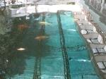 бассейн с рыбками обнесён стеклянными фрамугами... одна из них приоткрыта...Таиланд. отель Амбассадор