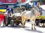 Йога-тур в Гималаи.Дели-14