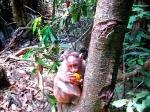 Телесно-медитативные практики, направленные на осознание жизненной силы первопредков через непосредственное взаимодействие с дикими обезьянами
