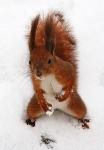 Ледяной ожог. Йога-семинар. Рыжая бестия выпрашивает орешки!