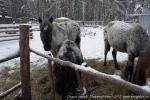Отдых на зимние каникулы для взрослых и детей. Ледяной ожог-2013-38