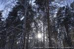 Отдых на зимние каникулы для взрослых и детей. Ледяной ожог-2013-24