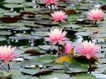 Йога-тур в Гималаи. В Китае Лотос это — цветок июля-6
