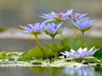 Йога-тур в Гималаи. В Китае Лотос это — цветок июля-4