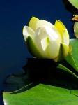 Йога-тур в Гималаи. В Китае Лотос это — цветок июля-2