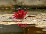 Йога-тур в Гималаи. Цветок Лотоса-4