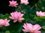 Йога-тур в Гималаи. Цветок Лотоса-9