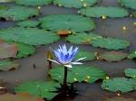 Йога-тур в Гималаи. Цветок Лотоса-7
