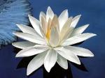 Йога-тур в Гималаи. Цветок Лотоса-10