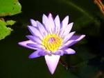 Йога-тур в Гималаи. Цветок Лотоса-15