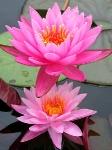Йога-тур в Гималаи. Цветок Лотоса-18