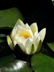 Йога-тур в Гималаи. В Китае Лотос это — цветок июля-11