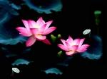 Йога-тур в Гималаи. В Китае Лотос это — цветок июля-12
