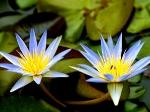 Йога-тур в Гималаи. В Китае Лотос это — цветок июля-13