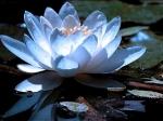 Йога-тур в Гималаи. В Китае Лотос это — цветок июля-16