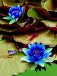 Йога-тур в Гималаи. В Китае Лотос это — цветок июля-17