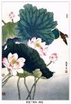 Йога-тур в Гималаи. Цветок Лотоса олицетворяет в Китае чистоту и целомудрие-19