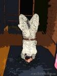 Хатха-йога для начинающих. Хождение по стеклу-12