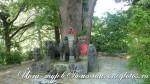 Усадьба Рериха. Йога-тур в Гималаи-5