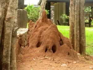 Откуда взялась идея Йоги Дважды Рожденных? Термитники и кастовый социум в Индии