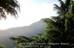 Йога-тур в Гималаи. Дхармасала-14