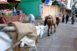Йога-тур в Гималаи. Дхармасала-44