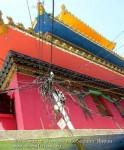 Йога-тур в Гималаи. Дхармасала-79