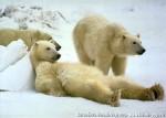 Хатха-Йога для начинающих. Белый Медведь-36