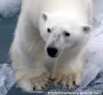 Хатха-Йога для начинающих. Белый Медведь-44