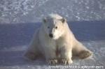 Хатха-Йога для начинающих. Белый Медведь-38