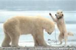 Хатха-Йога для начинающих. Белый Медведь-6