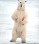 Хатха-Йога для начинающих. Белый Медведь-55