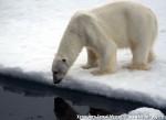 Хатха-Йога для начинающих. Белый Медведь-11