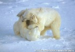 Хатха-Йога для начинающих. Белый Медведь-9