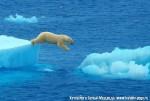Хатха-Йога для начинающих. Белый Медведь-13