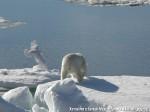 Хатха-Йога для начинающих. Белый Медведь-12