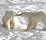 Хатха-Йога для начинающих. Белый Медведь-15