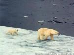 Хатха-Йога для начинающих. Белый Медведь-17