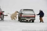 Хатха-Йога для начинающих. Белый Медведь-19
