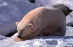 Хатха-Йога для начинающих. Белый Медведь-49
