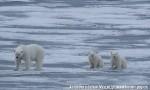 Хатха-Йога для начинающих. Белый Медведь-50