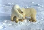 Хатха-Йога для начинающих. Белый Медведь-48