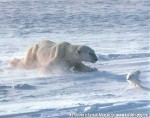 Хатха-Йога для начинающих. Белый Медведь-26