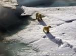 Хатха-Йога для начинающих. Белый Медведь-28