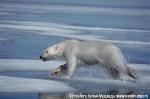 Хатха-Йога для начинающих. Белый Медведь-47