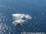 Хатха-Йога для начинающих. Белый Медведь-31