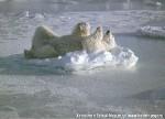 Хатха-Йога для начинающих. Белый Медведь-32