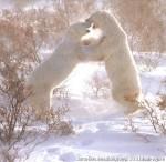 Хатха-Йога для начинающих. Белый Медведь-35