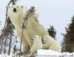 Хатха-Йога для начинающих. Белый Медведь-43