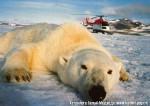 Хатха-Йога для начинающих. Белый Медведь-42